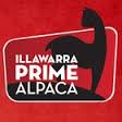 Illawarra Prime Alpaca